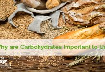 Why are Carbohydrates Important to Us